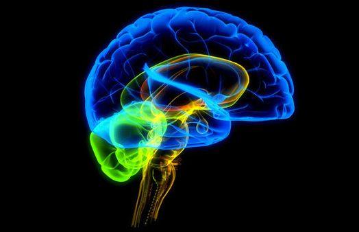 Seminario Universitario de Neurociencias y Educación